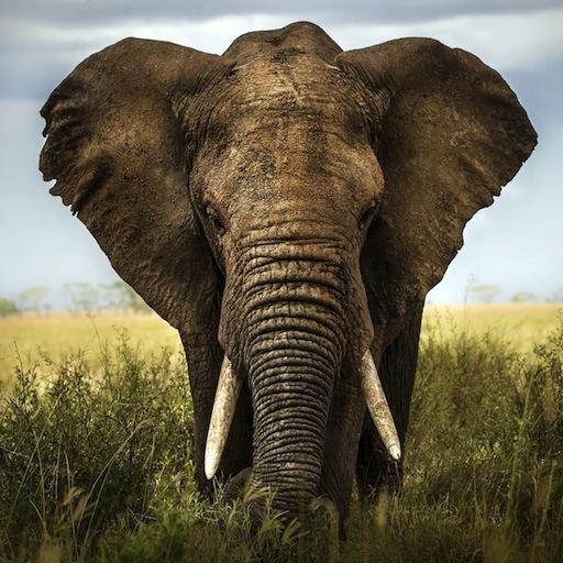 大象动态壁纸 LOGO-APP點子