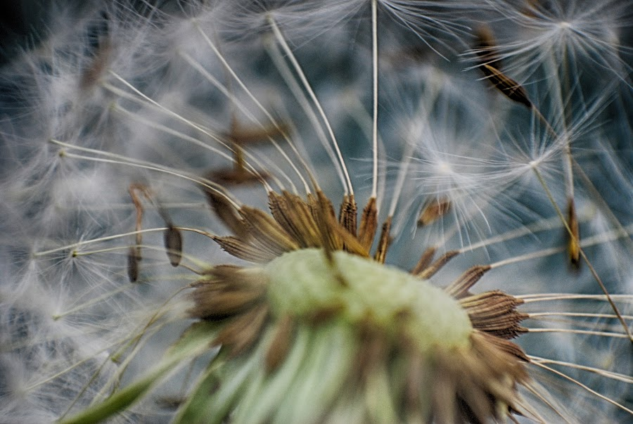 by Ivan Marjanovic - Nature Up Close Other plants