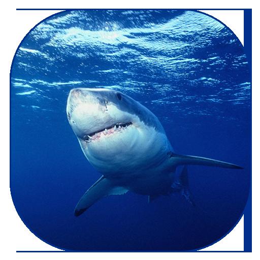 サメのライブ壁紙 個人化 App LOGO-硬是要APP