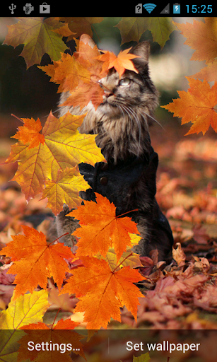 Cat in autumn leaves Wallpaper