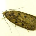 Brown House-moth
