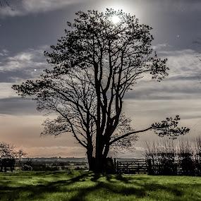 Moonlight Shadow by Don Cardy - Uncategorized All Uncategorized (  )