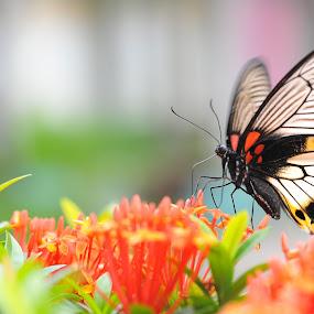 Breakfast by Irawan Sudjana - Animals Other ( butterfly, butterfy, animal )