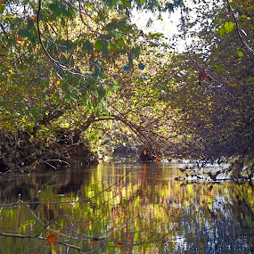 Baike Island Trail - November 2013 by Art Straw - Landscapes Waterscapes ( autumn, fall, fishing, landscape, river,  )