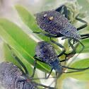 Coreid bugs