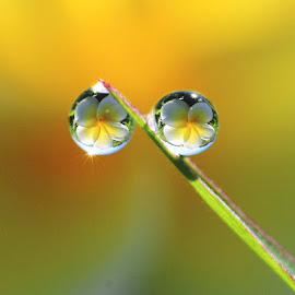 You and Me by Dedy Haryanto - Nature Up Close Natural Waterdrops