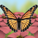 Butterflies 3D Live Wallpaper logo
