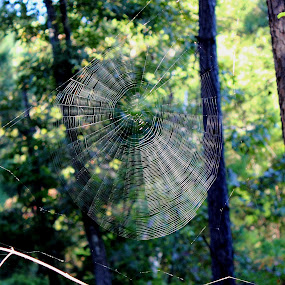 by Christie Henderson - Nature Up Close Webs ( web, spiderweb )