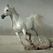 500 HD Amazing Horse Pictures