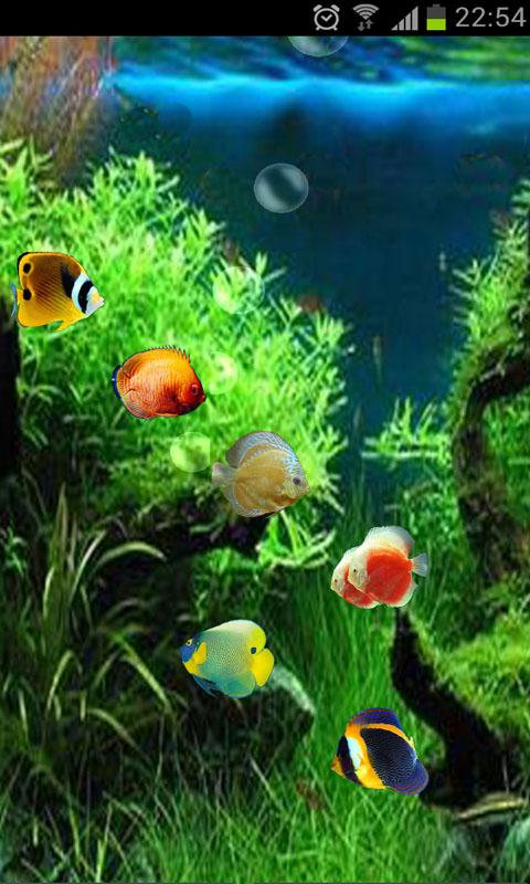 3d lost temple android os video description ocean aquarium 3d lost ...