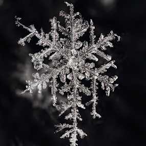 Snowflake 20 20150103 by Brent Bristol Sr. - Nature Up Close Other Natural Objects ( 3x, macro, focus stacking, snowflake, zerene stacker )