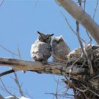 Great Horned Owl&Owlet