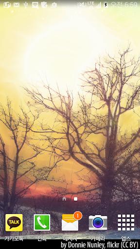 아름다운겨울숲의아침배경