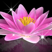 Water Lily Bell LiveWallpaper
