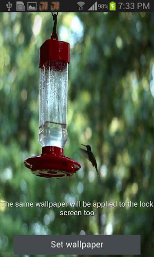 Humming Bird Live Wallpaper
