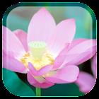 蓮花ライブ壁紙 icon