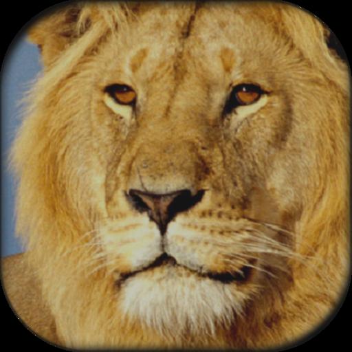 Lion Sound Board 娛樂 App LOGO-APP開箱王