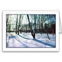 Winter Nature HD Wallpaper icon