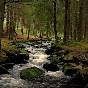 Hamersky Potok  by Michal Valenta - Landscapes Forests
