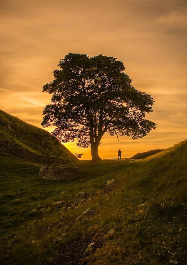 Robin Hood's Tree by Katerina Folprechtova - Novices Only Landscapes ( northumberland, tree, sunset, robin hood movie, hadrians wall )