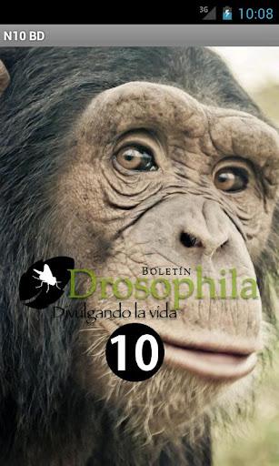 N10 Boletín Drosophila
