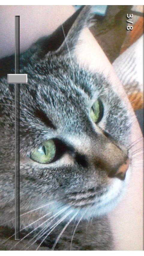 beeCam IntervalShot- screenshot