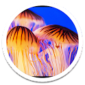 G3 Jelly Fish Live Wallpaper icon