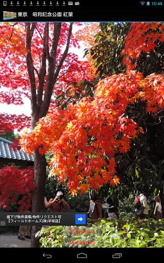 東京 昭和記念公園 紅葉 JP067