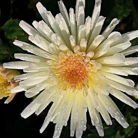 by Debapriya Bhattacharya - Nature Up Close Flowers - 2011-2013