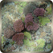 Underwater LWP Free