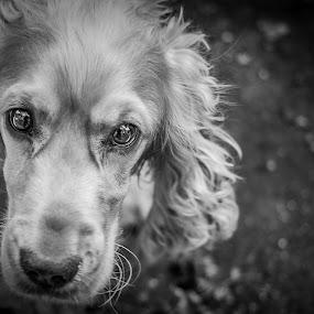 Joe by Fabio Grezia - Animals - Dogs Portraits
