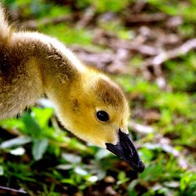 by Victoria Loos - Animals Birds