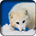 Arctic Fox Wallpapers icon