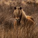 Horses Slide Show icon