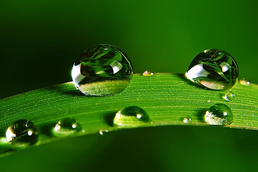 by Sengkiu Pasaribu - Nature Up Close Natural Waterdrops