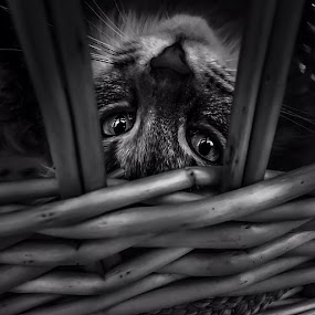 by Sheila Marques - Black & White Animals
