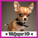 Chihuahua Wallpapers HD icon