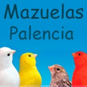 Canary Mazuelas