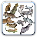 Amazing Cats pictures logo