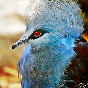 Victoria Crowned Pigeon by Jerry Ehlers - Digital Art Animals ( tulsa, zoo, oklahoma, victoria crowned, pegeon, digitally altered,  )