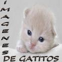 Imagenes de gatitos icon
