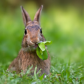 i eat by Stefano Ronchi - Animals Other Mammals