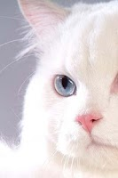 Screenshot of Persian Cat Puzzle