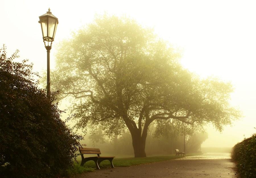 Vyšehrad by Michal Snopek - City,  Street & Park  City Parks ( tree, fog, lamp, sunrise, morning, prague, garden, vysehrad )