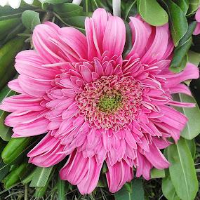 by Mariana Bešker - Flowers Single Flower
