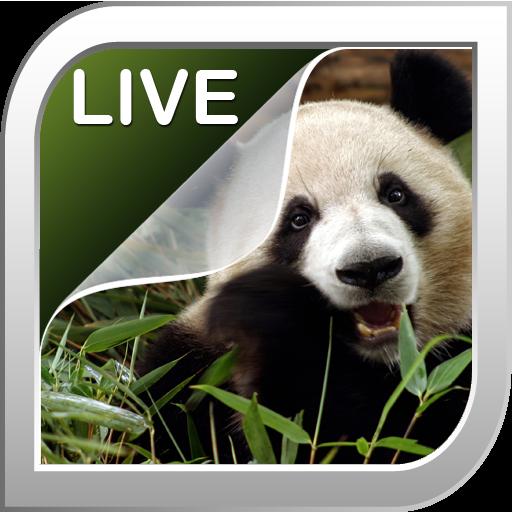 熊貓動態壁紙 個人化 App LOGO-APP試玩