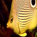 Color Fish LWP No4 Pro