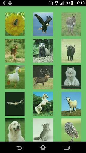 Animal Sounds For Kids - 2014