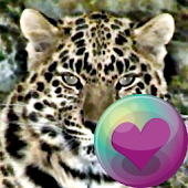 Leopard Series Live Wallpapers