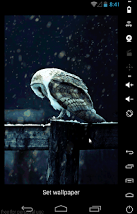 Hedwig Live Wallpaper